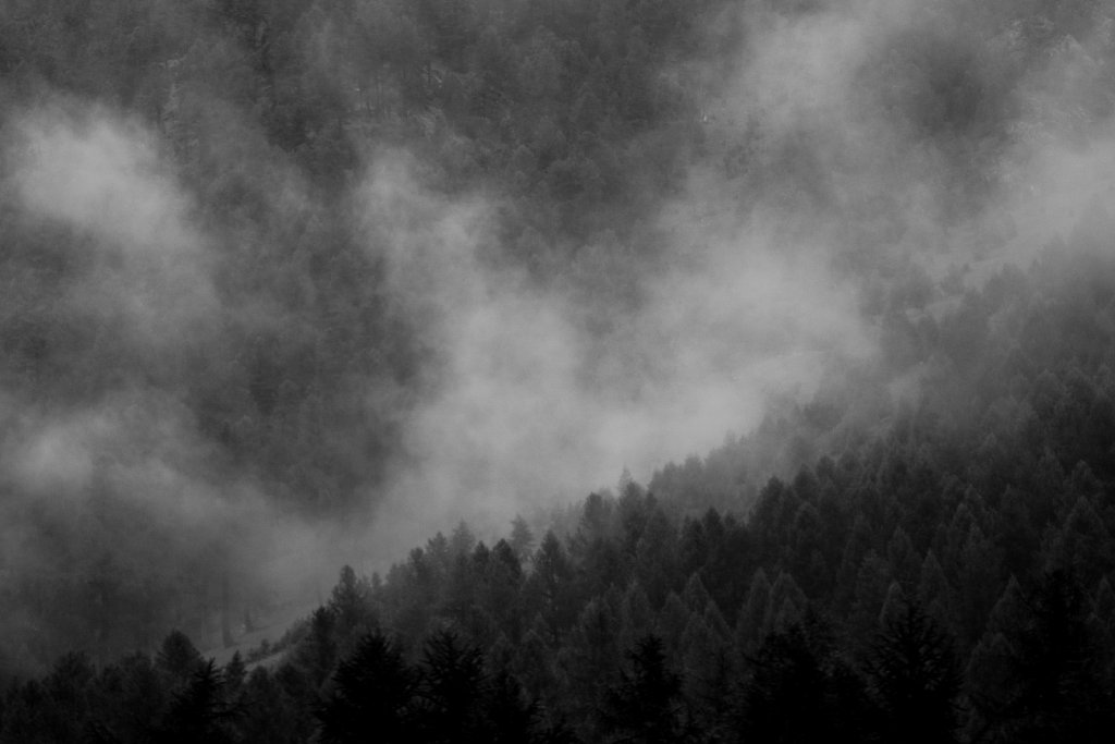 Cloudy pine trees